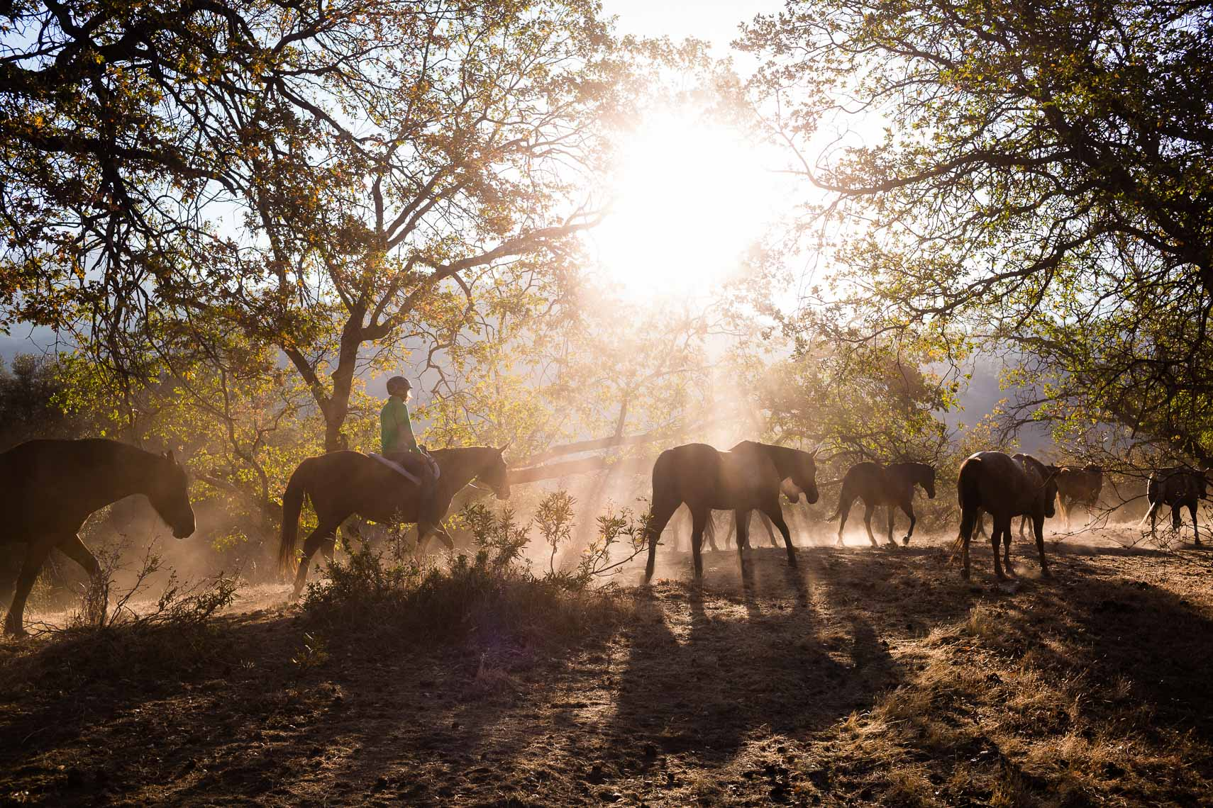 Horse Roundup Ranch Camp