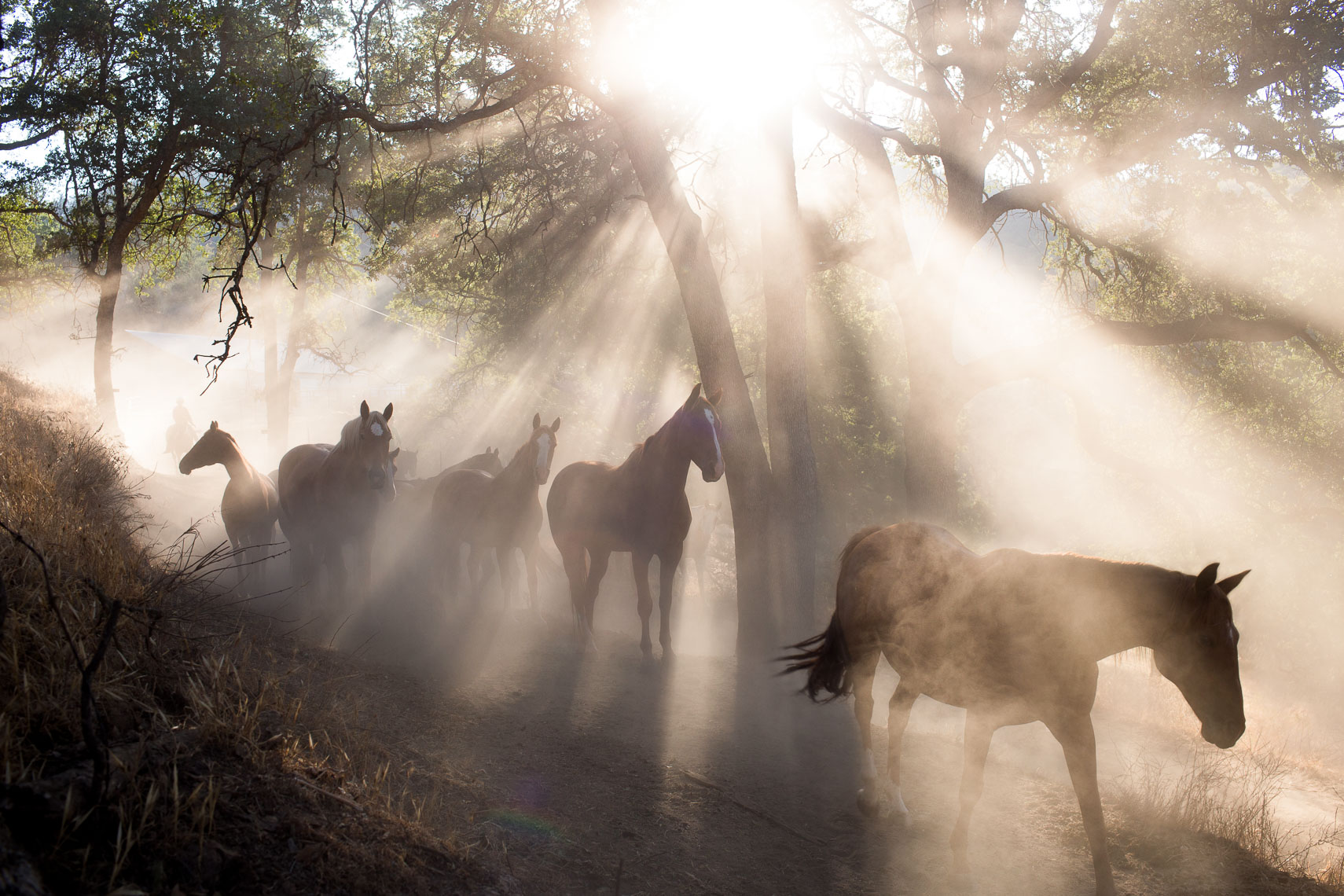 Morning Light Horses
