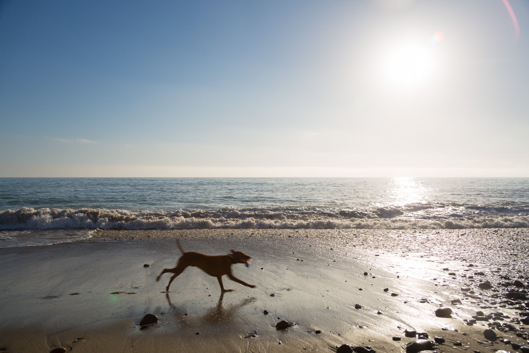 02-Active-Lifestyle-Dog-Beach