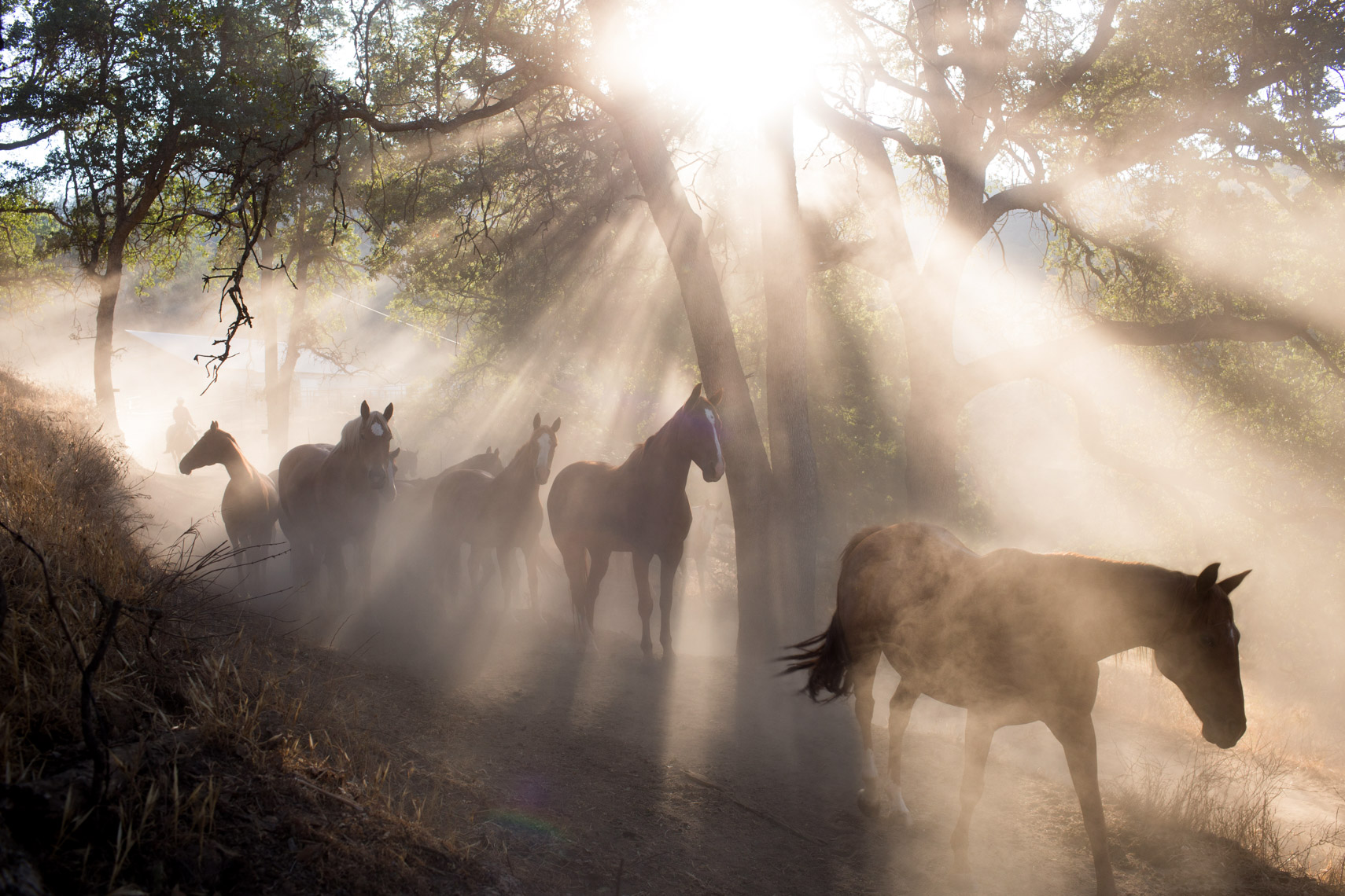 04-Portfolio-Morning-Light-Horses