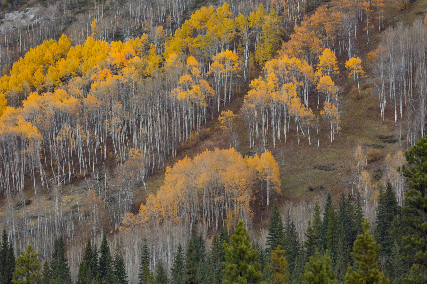 25-Travel-Banff-Aspens