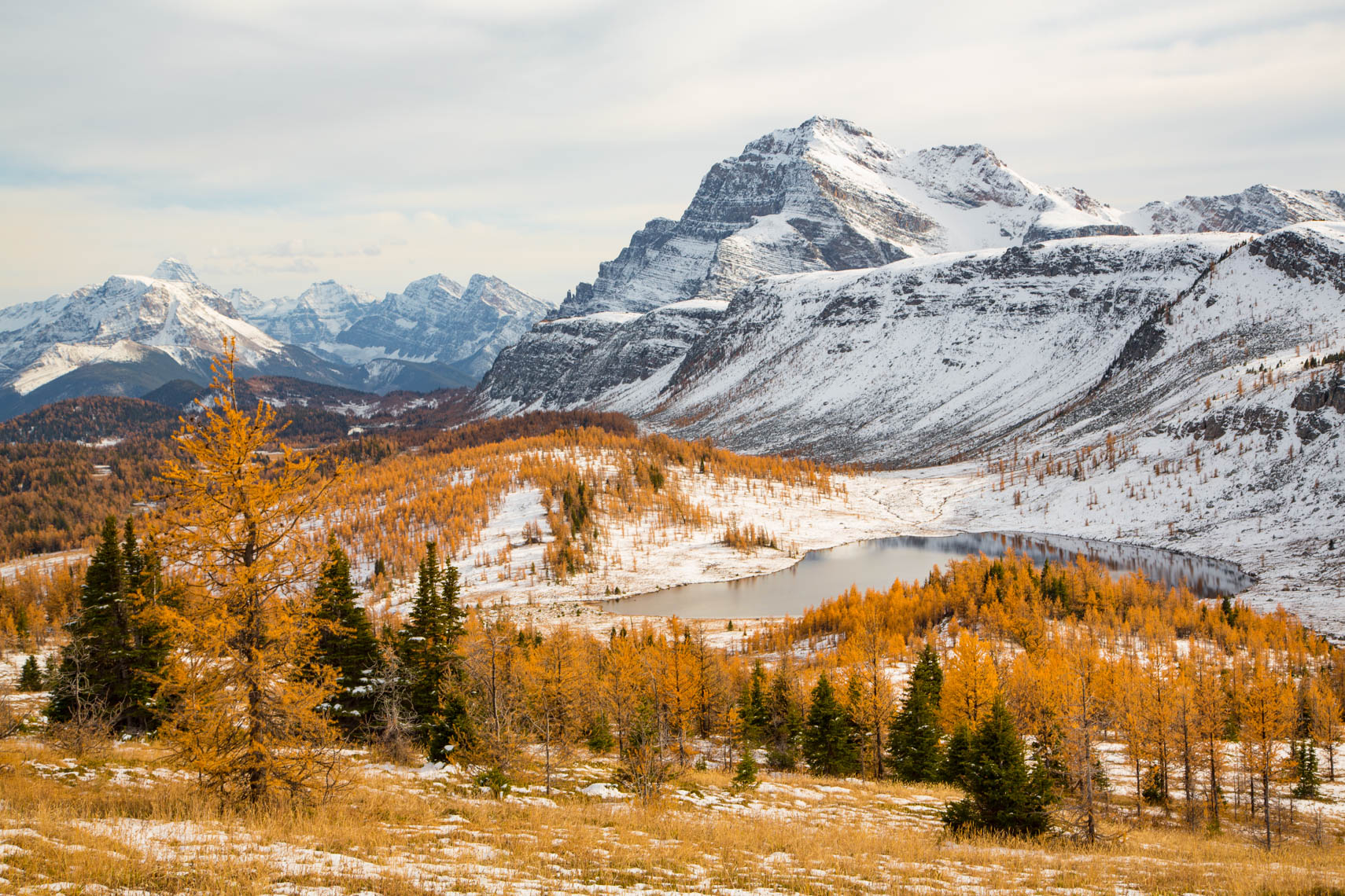 30-Travel-Healy-Pass-Larch-Trees