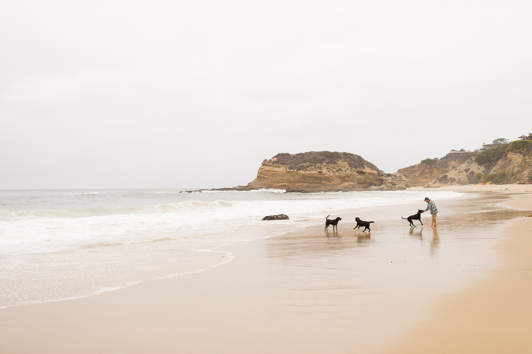 Black Labs Beach
