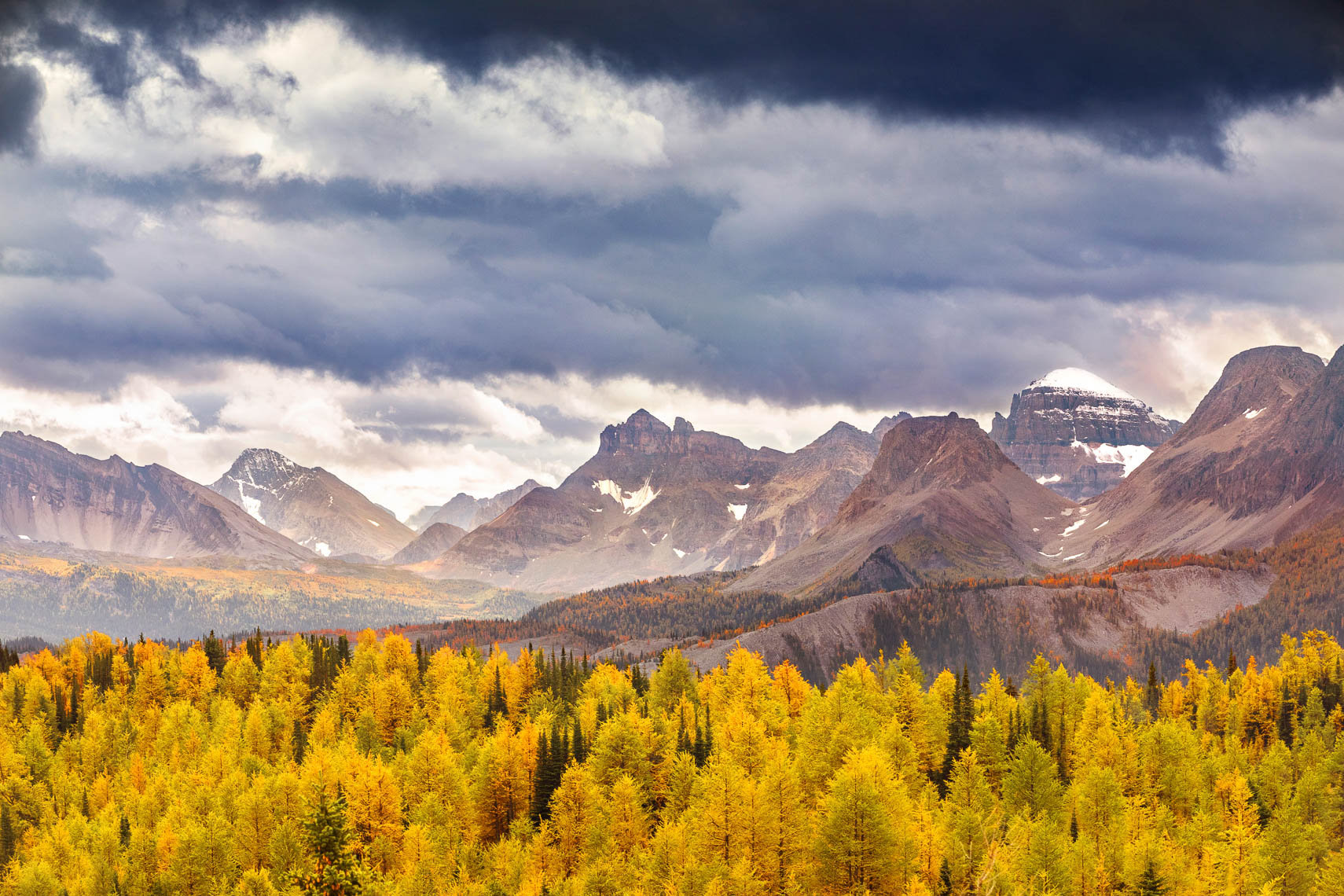 Citadel Pass Larches